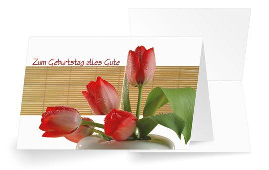 Tulip Stars